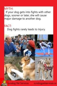 Dog Arguements